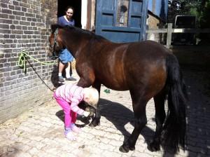 puten Pony